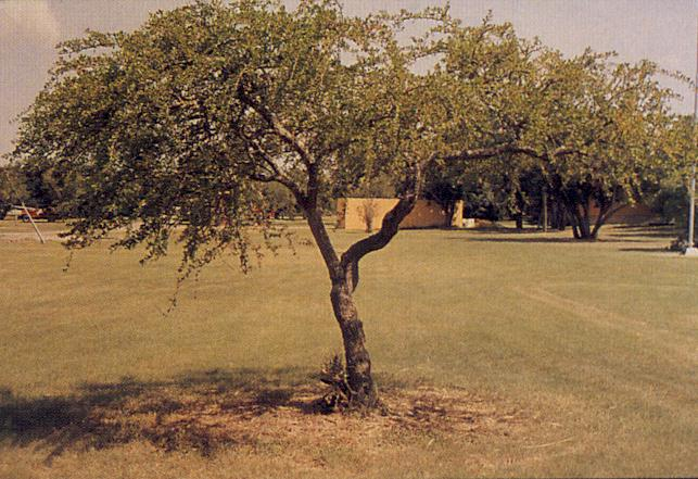 Evergreen Trees That Grow Well In Shade